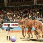 Leading War Horse at Olympia Horse Show