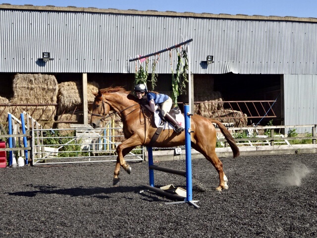 Jack jumping through our practice archway fence