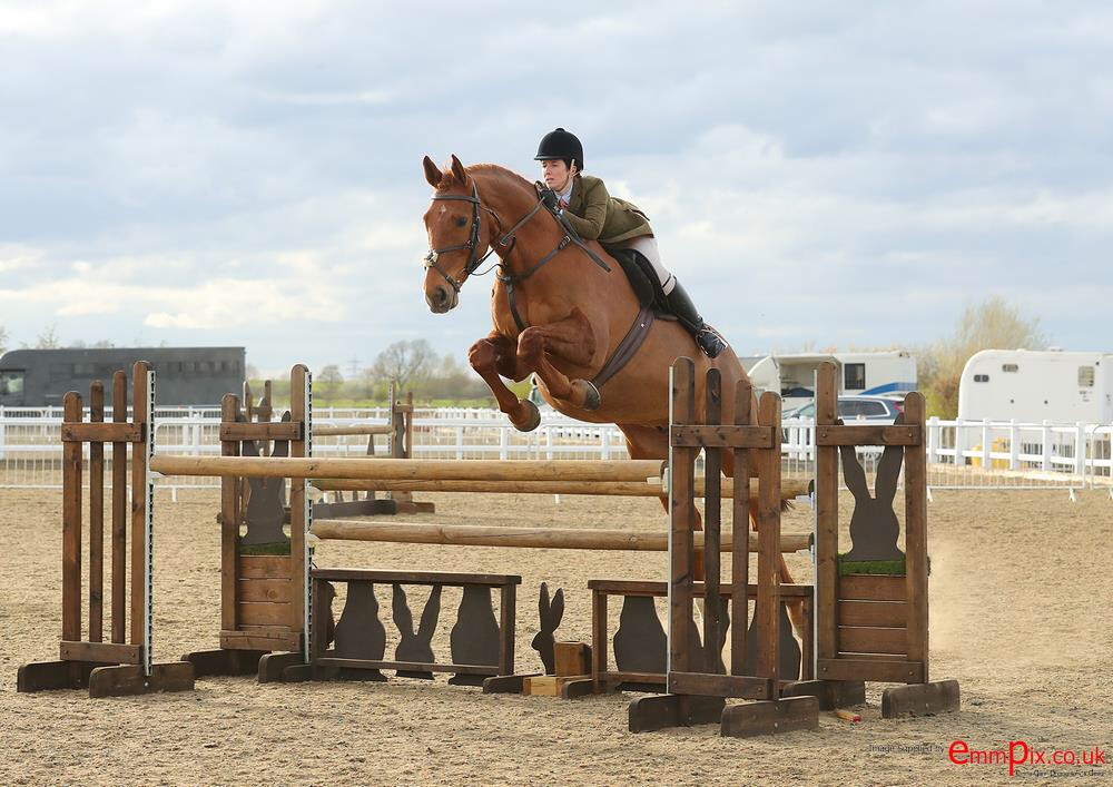 Jack jumping working hunter fence