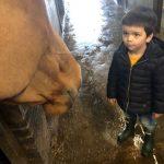 Boy talking to horse