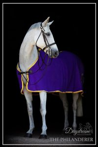 The Philanderer photographed by Daydream Equine Art.