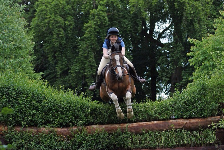jumping, hedge, horse