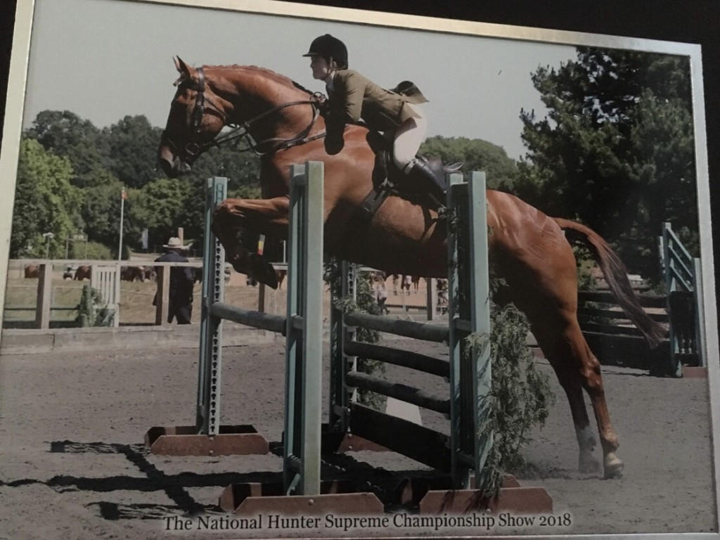 Jumping the novice working Hunter