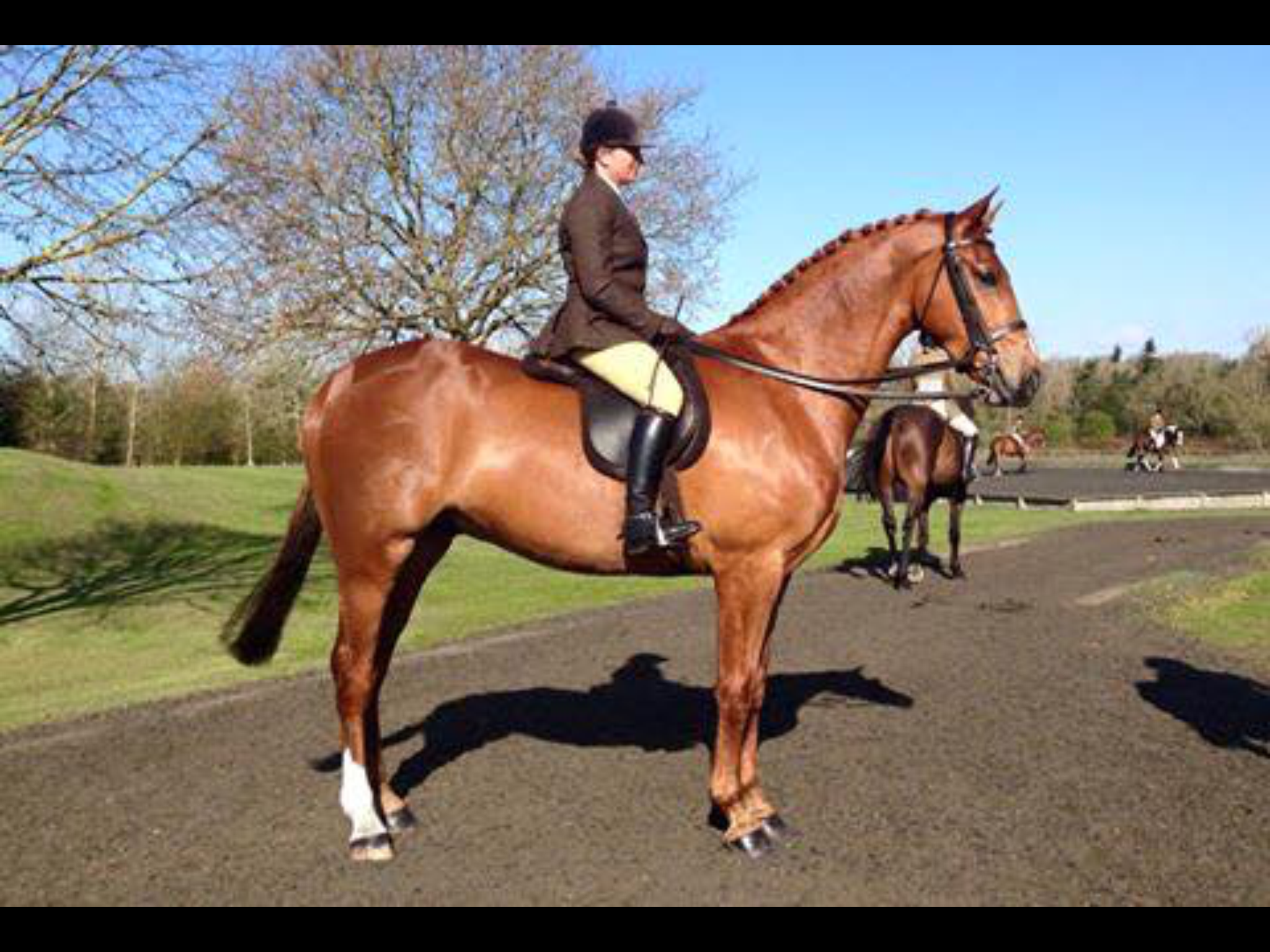 addington horse for sale