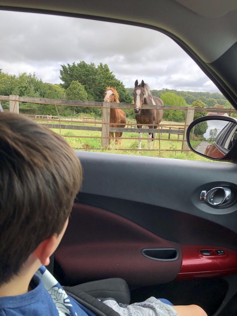 Ponies looking at cad